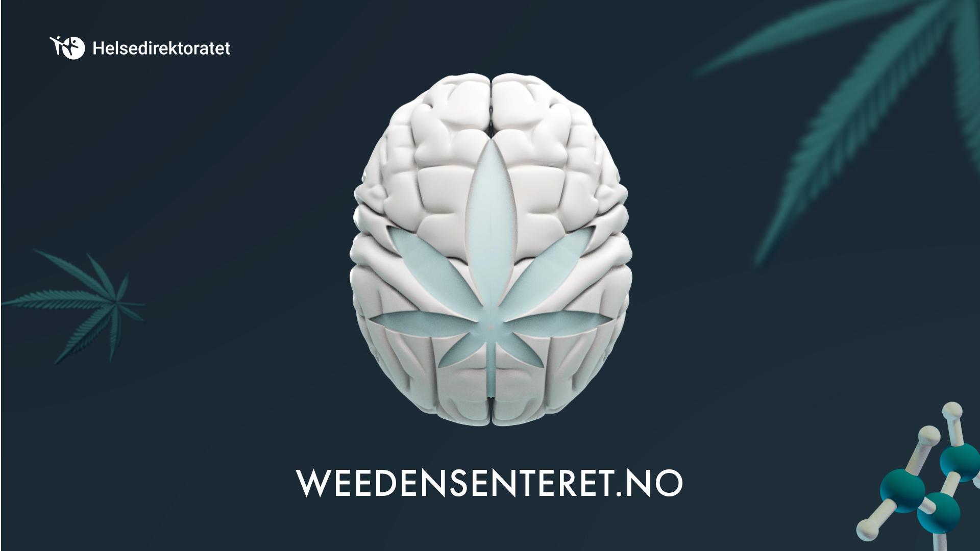 Helsedirektoratet Vil Gi Ungdom Noktern Info Om Cannabis Fagradet Rusfeltets Hovedorganisasjon